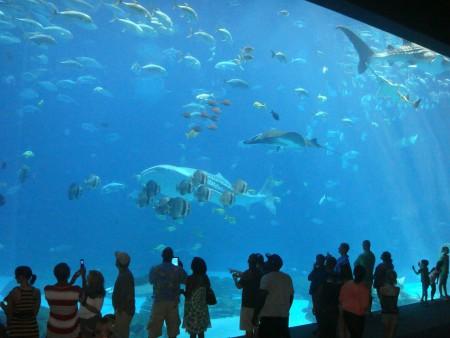 aquarium-456566_1280